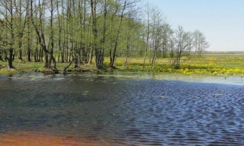 Zdjęcie POLSKA / Podlasie / dolina Biebrzy / Podlaska wiosna.