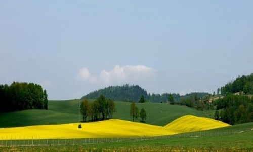 Zdjecie POLSKA / dolnoślaskie / Trzebieszowice / Żółto zielone pola