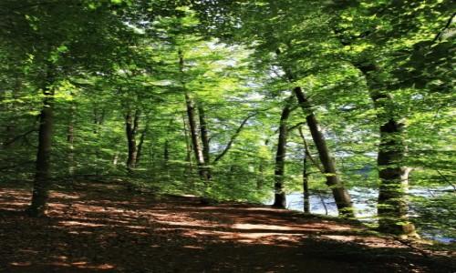 Zdjęcie POLSKA / Kolbudy / Otomiński Obszar Chronionego Krajobrazu / Ścieżka nad wodą
