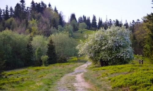 Zdjecie POLSKA / Małopolska / Gorczański Park Narodowy / Popołudniowe Gorce