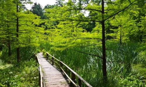 Zdjecie POLSKA / Podkarpacie / Arboretum w Bolestraszycach / W Zielone Iść