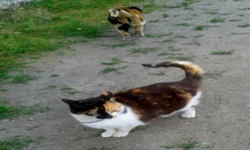 Zdjecie POLSKA / pomorskie / Rumia / Koty z kaktusiarni