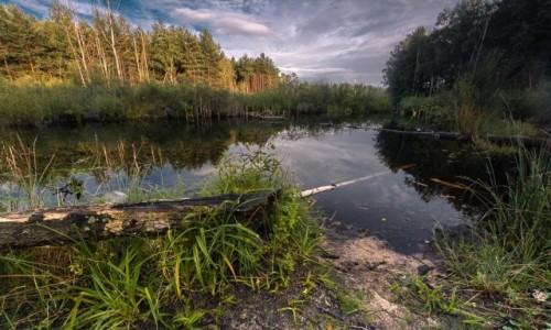 Zdjecie POLSKA / mazowsze / . / Mazowiecki Park Krajobrazowy