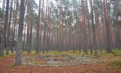 Zdjęcie POLSKA / zachodniopomorskie / Grzybniczka / Rezerwat Kamienne Kręgi w Grzybnicy