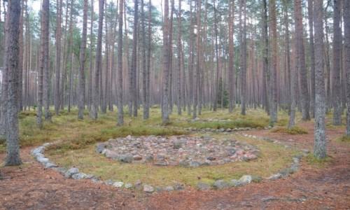 Zdjęcie POLSKA / zachodniopomorskie / Koszalin / Kamienne bruki w rezerwacie