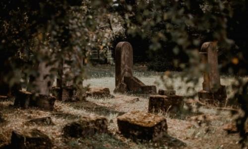 Zdjecie POLSKA / Niepołomice / Kirkut / Niepołomice - cmentarz żydowski