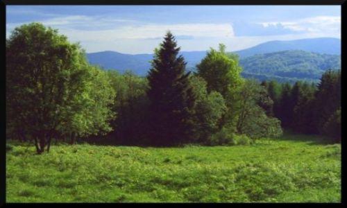 Zdjecie POLSKA / Bieszczady Wysokie / Tarnica / Tarnica - koniec lasu