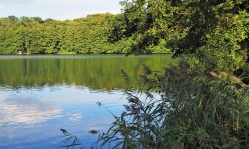 Zdjecie POLSKA / Lubuskie / Łagów Lubuski, Jezioro Trześniowskie / wciąż zielono...