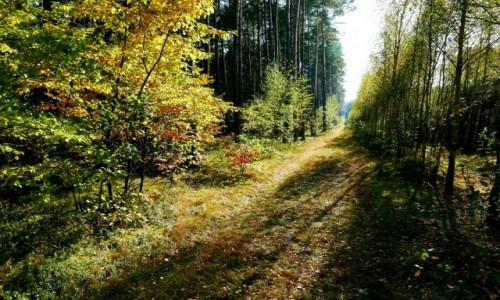 Zdjecie POLSKA / Łódzkie / Karolew / Jesień idzie ku mnie przez... las