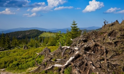 Zdjecie POLSKA / Małopolska / Gorczański Park Narodowy / Jeden Stoi, Drugi Leży