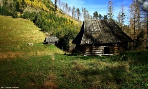 Zdjecie POLSKA / Zakopane / Niżnia Polana Kominiarska / Polana reglowa w Tatrach Zachodnich