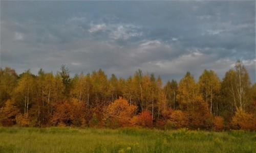 Zdjecie POLSKA / Śląsk / Ochojec / Jesień