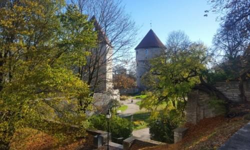 Zdjęcie ESTONIA / Harjumaa / Tallinn / Jesień na Talińskich murach