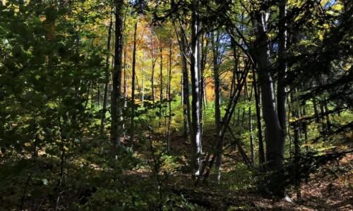 POLSKA / Dolny Śląsk / Rudawski Park Krajobrazowy / w lesie...