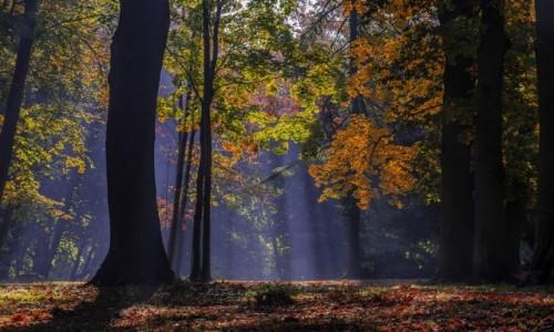 Zdjecie POLSKA / Warmia / Braniewo / jesien  w parku