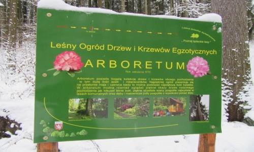 Zdjecie POLSKA / Lądek Zdrój  / Lądek Zdrój / Arboretum