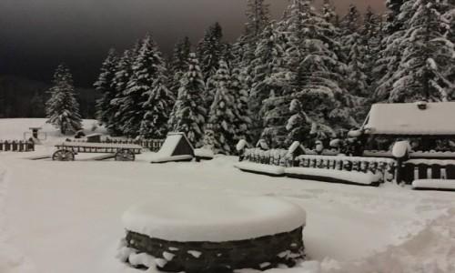 Zdjecie POLSKA / Tatry / Zakopane  / Zaczarowana zima