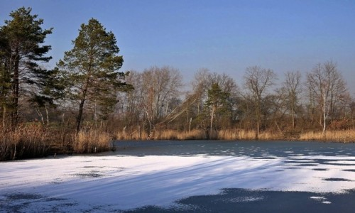Zdjecie POLSKA / opolskie / Nad Odrą / Staw zimą, bez śniegu :(