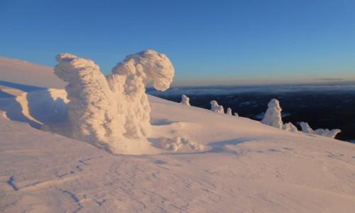 Zdjecie POLSKA / karkonosze / masyw śnieżnika / masyw śnieżnika