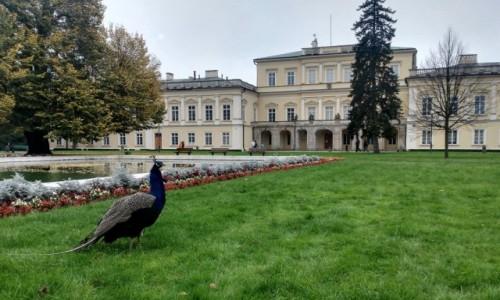 Zdjecie POLSKA / Lubelszczyzna / Puławy / Pałacowy strażnik