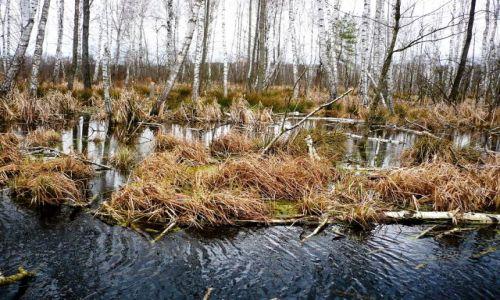 Zdjęcie POLSKA / mazowsze / mazowsze /  leśne mokradła