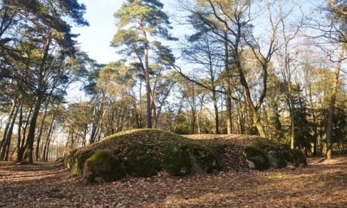 Zdjęcie POLSKA / kujawsko-pomorskie / Wietrzychowice / Megality sprzed 6000 lat