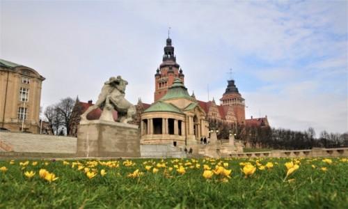 Zdjecie POLSKA / zachodniopomorskie / Szczecin / Krokusy na Wałach Chrobrego