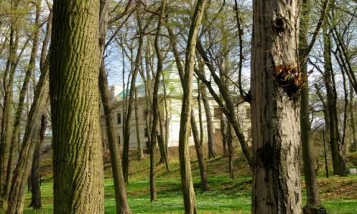 Zdjecie POLSKA / Przedgórze Iłżeckie / Chlewiska / Park przy Pałacu Odrowążów