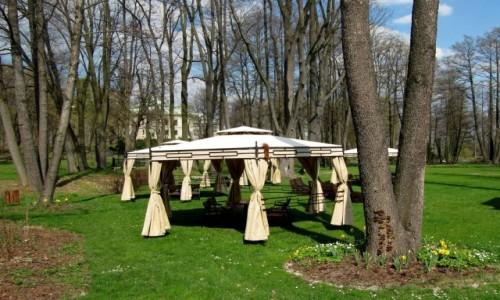 Zdjecie POLSKA / Przedgórze Iłżeckie / Chlewiska / W parku