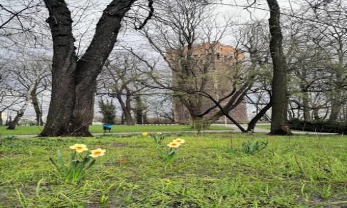 Zdjecie POLSKA / śląskie / cieszyn / Cieszyńska wiosna