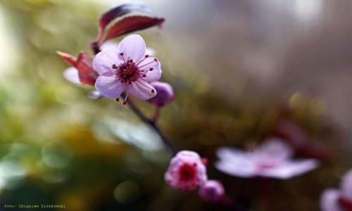 Zdjecie POLSKA / pow-żniński / Dolina Noteci / Kwiaty, które lubią słońce....