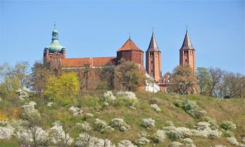 Zdjęcie POLSKA / mazowieckie / Płock / Katedra i Zamek Książąt Mazowieckich na Wzgórzu Tumskim w Płocku