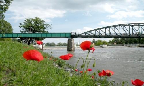 Zdjecie POLSKA / opolskie / Nad Odrą / na lewo most na prawo też, a dołem Odra płynie :)