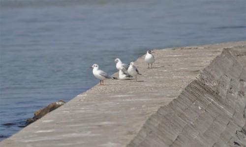 Zdjęcie POLSKA / Pomorze / Jastarnia / Jastarnia, falochron, ptaki
