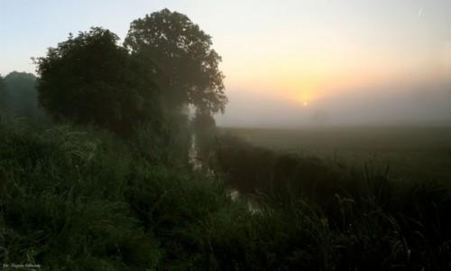 Zdjecie POLSKA / Dolina Noteci / Nadnoteckie łęgi / Kto rano wstaje jest niewyspany....