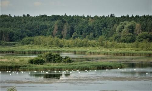 Zdjecie POLSKA / Pojezierze Iławskie / Prabuty / Rezerwat przyrody - Jezioro Liwieniec