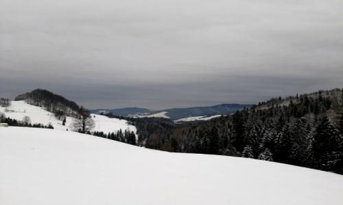 Zdjecie POLSKA / - / W drodze na Wysoka / Szczawnica
