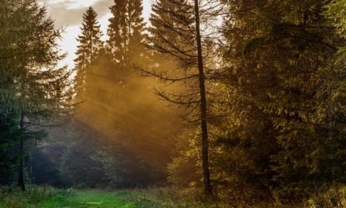 POLSKA / Bieszczady / Muczne / Leśna ścieżka