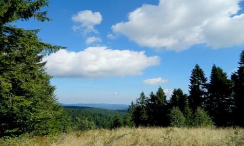 Zdjecie POLSKA / małopolskie / Jaworzyna Krynicka / Na szlaku do schroniska PTTK