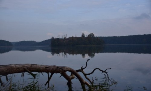Zdjecie POLSKA / Drawieński Park Narodowy / Jezioro Ostrowieckie / Zwalona sosna