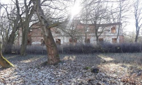 Zdjęcie POLSKA / Dolny Śląsk / Żelazny Most, Gmina Polkowice / Ruiny pałacu w Żelaznym Moście