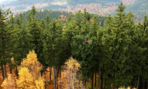 POLSKA / dolnoślaskie / Boguszów, Góra Dzikowiec / Za świerkami, pasmo Lesistej Wielkiej