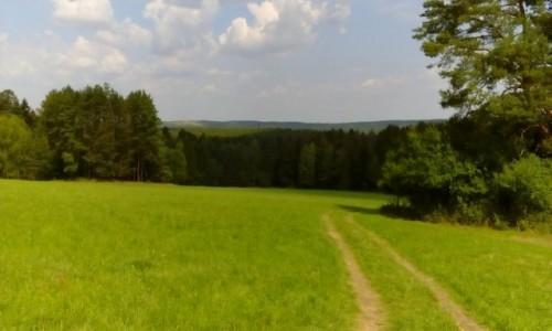 Zdjęcie POLSKA / Roztocze / Zwierzyniec / Widok z Piasecznej Góry
