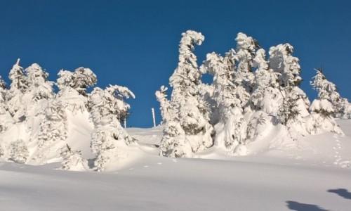 POLSKA / Dolnośląskie  / Śnieżnik  / Tak było 8 lutego na Śnieżniku