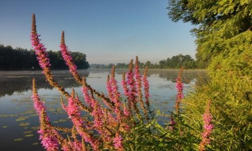 Zdjęcie POLSKA / DOLINA KARPIA / Spytkowice / flora w starorzeczu Wisły