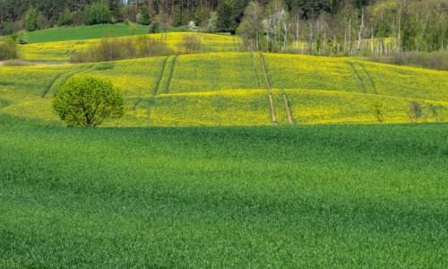 Zdjecie POLSKA / Mazury / okolice Giżycka / Gra w żółte i zielone