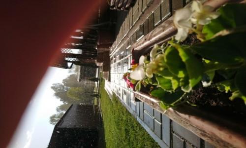Zdjecie POLSKA / Lubelskie  / Wierzejki / Deszcz