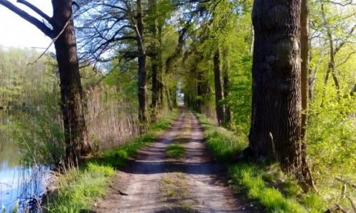 Zdjęcie POLSKA / Dolina Baryczy / Krośnice / Droga przy stawie