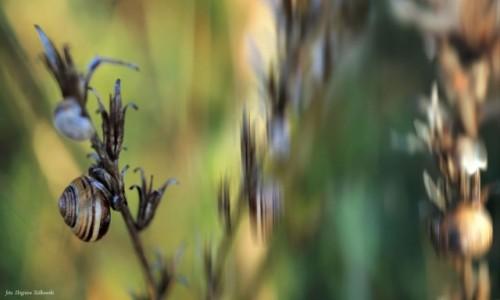 Zdjecie POLSKA / Dolina Noteci / Nadnoteckie łęgi / Potrafią doszczętnie zniszczyć rośliny!