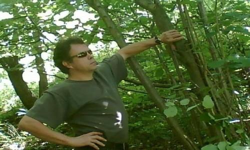 Zdjecie POLSKA / - / Sudety / W lesie